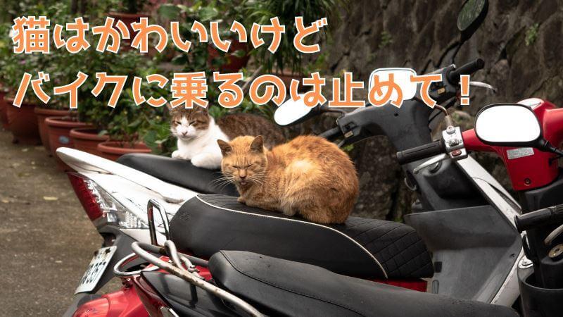 猫除け3選