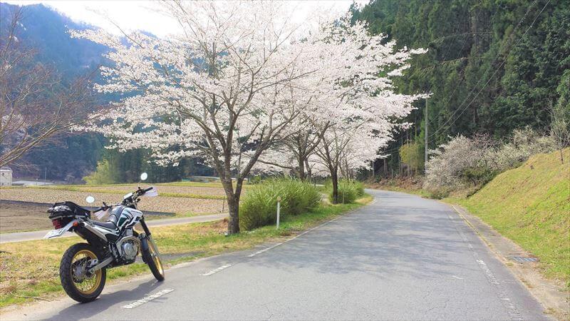 里山は桜の隠れ名所