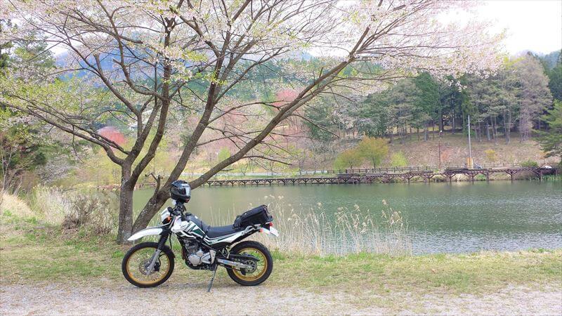 名も無い池は桜の隠れ名所