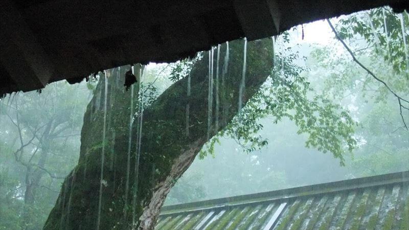 一過性の雨なら一時退避か逃げる