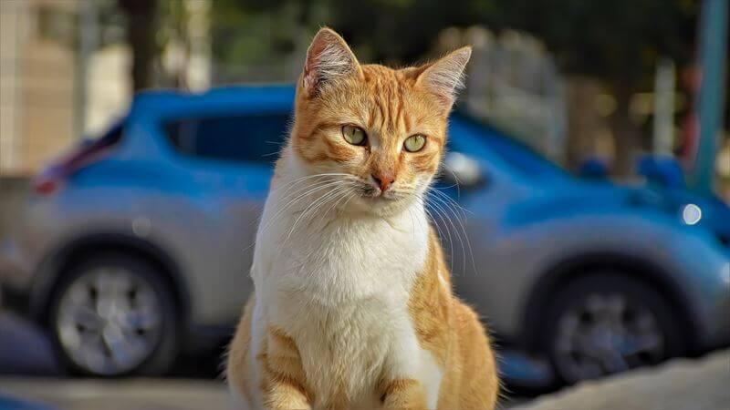 猫の飛び出しを予防する方法